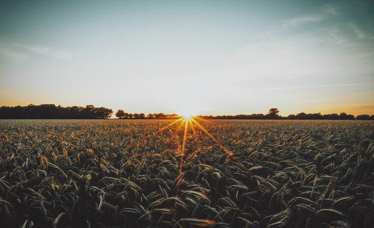 Agritech: El camino hacia la sostenibilidad alimentaria