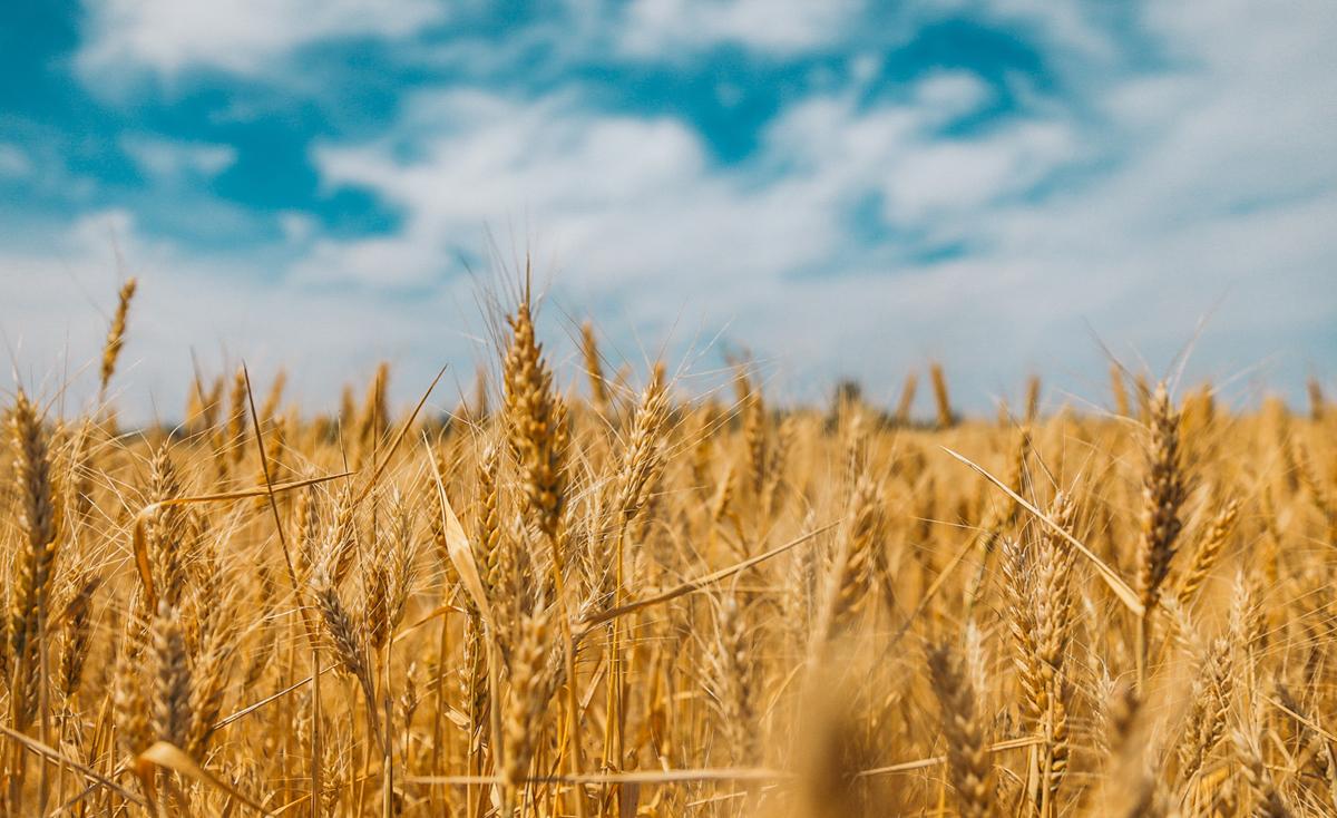 El futuro de la comida está en un sistema alimentario global, sano y sostenible